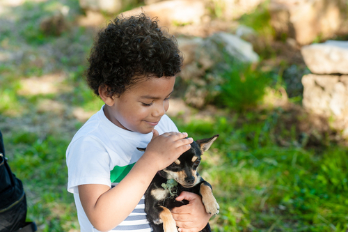 Kids, Fostering & Pets